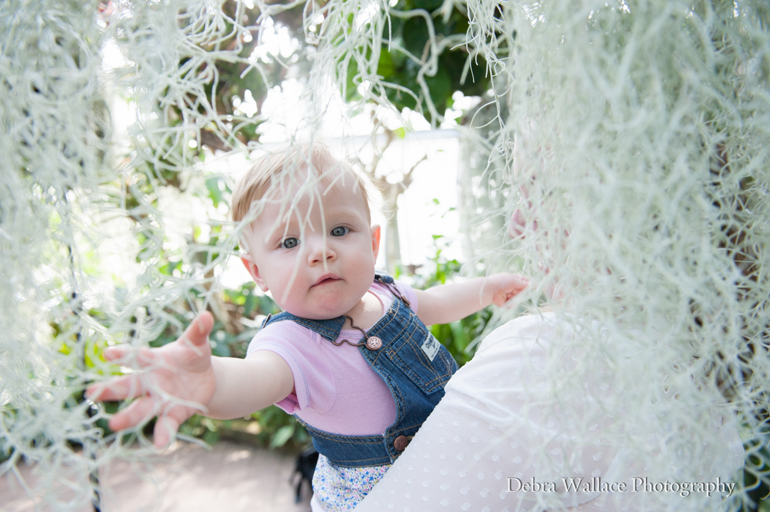 lamberton conservatory baby photography rochester ny-3080 indoor locations